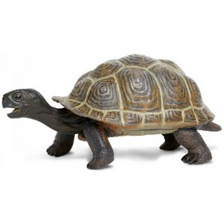Safari Ltd. Incredible Creatures® 260829 - Junge Galapagos Schildkröte