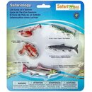 Safari Ltd. Safariology® 100267 - Lebenszyklus des Lachs