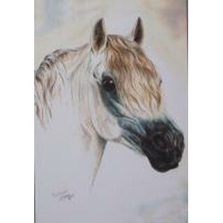 Pferdepostkarte Welsh Pony Rabbiner